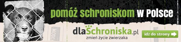 Pomóż schroniskom w Polsce