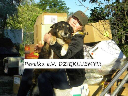 podz perelka4