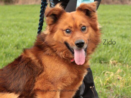 Chłodny Psy do adopcji - Przytuliska u Wandy OM12